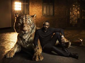 Обои Тигры Мужчины Негр The Jungle Book 2016 Фильмы фото