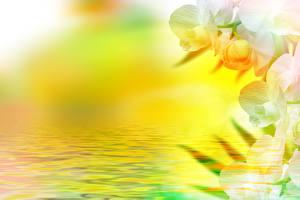 Обои Орхидеи Вода Крупным планом Цветы фото