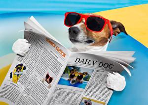 Картинка Собаки Джек-рассел-терьер Газета Очки Забавные Животные