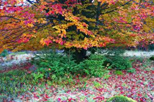 Фото Украина Осень Карпаты Ель Листья Природа