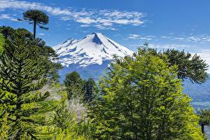 Фотографии Чили Парки Горы Небо Пейзаж Ели Conguillio National Park Природа