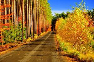Обои Дороги Леса Осень Природа фото