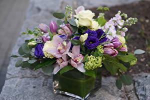 Обои Букеты Орхидеи Эустома Тюльпаны Левкой Цветы фото
