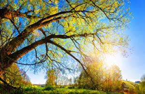 Обои Осень Ствол дерева Ветки Природа фото