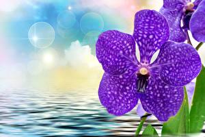Фотографии Орхидея Крупным планом Фиолетовые цветок
