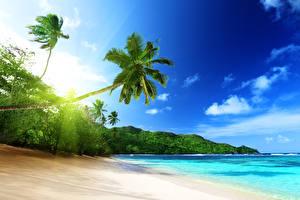 Обои Тропики Побережье Небо Пейзаж Пальмы Mahe island in Seychelles Природа фото