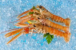 Картинки Морепродукты Креветки Трое 3 Лед Еда
