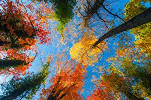 Обои Времена года Осень Ветки Листья Природа фото
