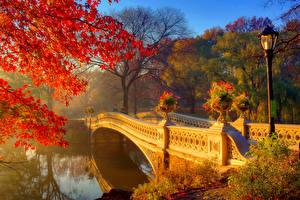 Обои Парки Осень Реки Мосты Ветки Уличные фонари Природа фото
