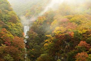 Обои Времена года Осень Леса Водопады Природа фото