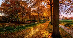 Обои Нидерланды Осень Деревья Водный канал Ствол дерева Листья Dorpsdijk Природа фото
