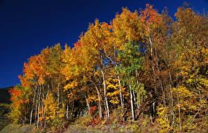 Фотографии Сезон года Осенние Деревья Березы