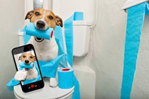 Фотографии Собаки Смартфон Джек-рассел-терьер Селфи Смешные Животные