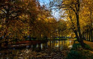 Обои Осень Нидерланды Пруд Деревья Листья Dorpsdijk Rhoon Природа фото