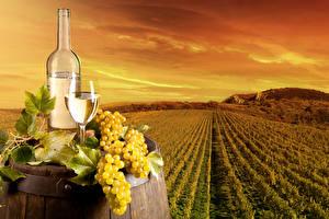 Картинки Поля Небо Виноград Вино Виноградник Бокалы Бутылка Природа