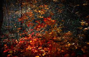 Обои Осень Времена года Леса Листья Природа фото