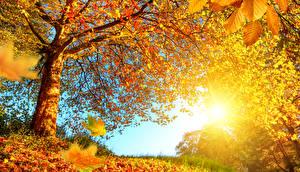 Обои Осень Деревья Листья Природа фото