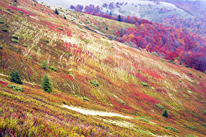 Обои Осень Украина Карпаты Трава Природа фото