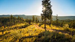 Обои Осень США Пейзаж Деревья Трава Colorado Природа фото