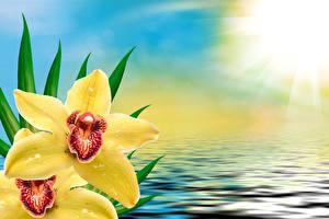 Обои Орхидеи Вода Желтый Цветы фото