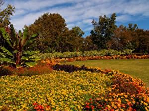 Обои США Сады Осень Бархатцы Деревья Газон Dallas Arboretum Природа фото