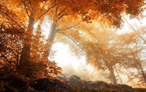 Обои Времена года Осень Деревья Природа фото