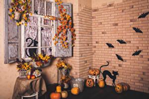 Фотографии Хеллоуин Интерьер Тыква Кошки Мыши