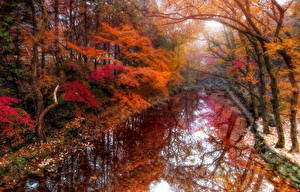 Картинка Осень Реки Деревья HDR Природа