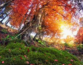 Обои Времена года Осень Деревья Ствол дерева Трава Природа фото
