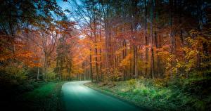 Обои Нидерланды Леса Дороги Осень Деревья Vaals Limburg Природа фото