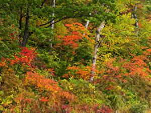 Обои Леса Осень Деревья Природа фото