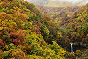 Обои Осень Леса Природа фото