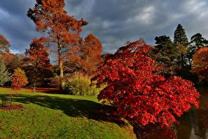 Обои Великобритания Сады Осень Деревья Sheffield Park Garden Природа фото