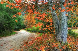Обои США Осень Дороги Ствол дерева Листья Природа фото