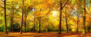 Обои Осень Парки Деревья Лучи света Листья Природа фото