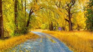 Обои Осень Дороги Деревья Листья Природа фото