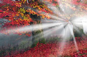 Картинка Украина Осенние Карпаты Листья Лучи света