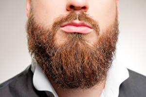 Обои Крупным планом Мужчины Борода Усы человека фото