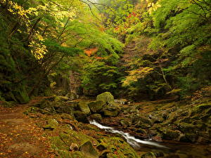 Обои Леса Водопады Камни Природа фото
