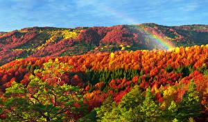 Фотография Украина Осень Леса Карпаты Закарпатье Радуга
