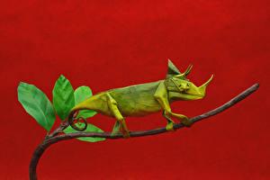 Картинки Хамелеон Оригами Бумага Животные