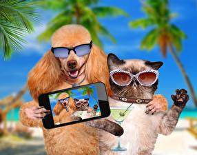Картинки Собаки Кошки Очки Смартфон Пудель Селфи Смешные Животные