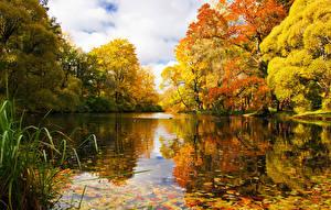Фотографии Санкт-Петербург Парки Озеро Пруд Россия Природа