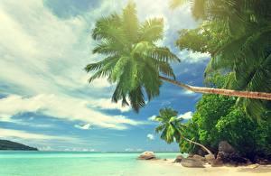 Фото Тропики Небо Океан Пальмы Seychelles Природа