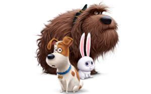 Картинки Собака Зайцы Белый фон The Secret Life of Pets 2016 Мультики