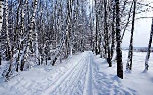 Картинка Дороги Зима Снег Березы Деревья