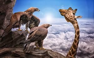 Обои Птицы Жирафы Орлы Облака