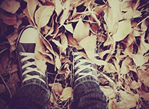 Фотографии Осенние Листья Кеды Шнурки