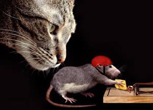 Картинки Коты Крысы Сыры Шлем Черный фон Смешные Животные
