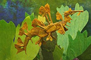 Фотография Оригами Бумага Leafy Sea Dragon